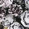 Bouquet (Close Up)