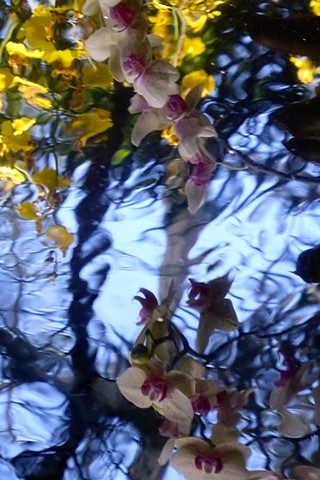 Orchid Reflections V
