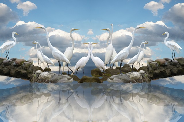 Mirrored Sky Meditation: Egret Gathering