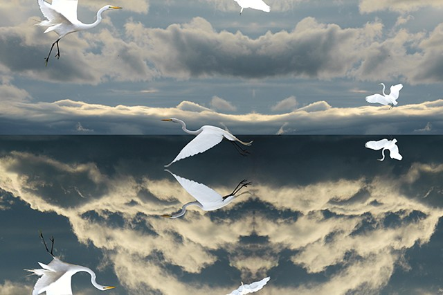 Mirrored Sky: Egret