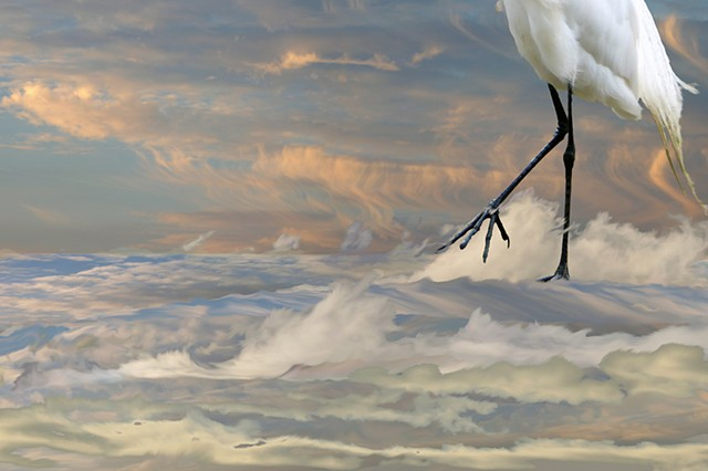 Meditation on Air: Egret Walking