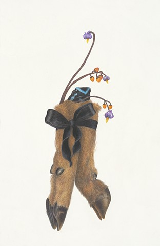 Lauren Levato Coyne drawing, poison dart frog, severed hooves