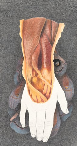 #laurenlevatocoyne, #wolfpeach, #drawing, #coloredpencil, laurenlevatocoyne, wolf peach, anatomical hand and arm drawing by Lauren Levato Coyne with altered polyphemus moths, prismacolor, faber castell, pencils, graphite, colored pencil, Lauren Levato Coy