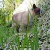 Alice investigating Millefiori Fence Section