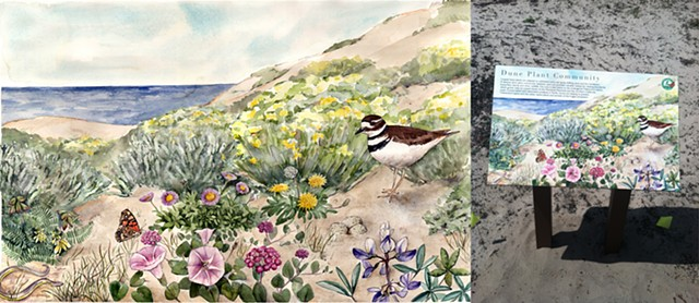 Interpretive panel, artwork, dune plants
