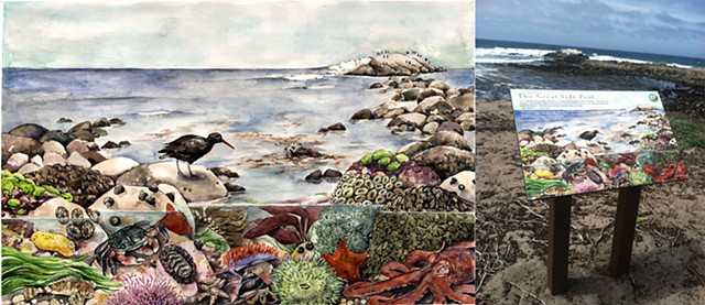Interpretive panel, tidepools