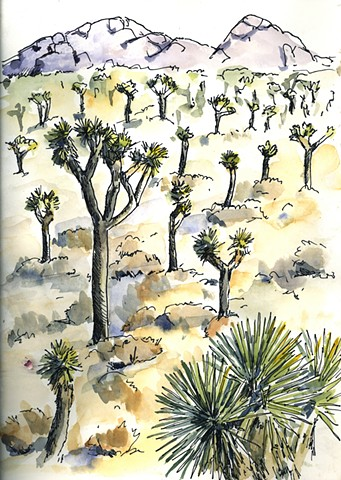 A Joshua Tree Woodland