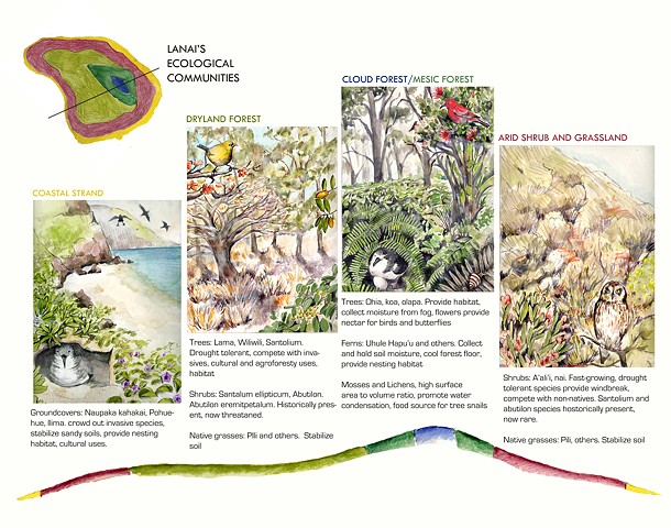 Hawaii Ecotypes