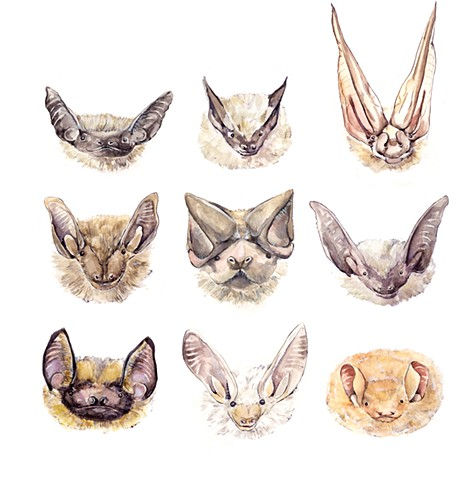 Watercolor of bats by Emily Underwood