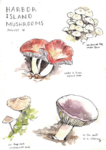 Harbor Island Mushrooms