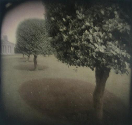 Gumdrop Trees I, Blenheim, England