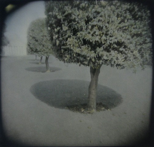 Gumdrop Trees II, Blenheim, England