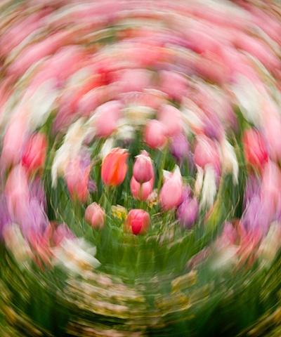 Spinning Tulips