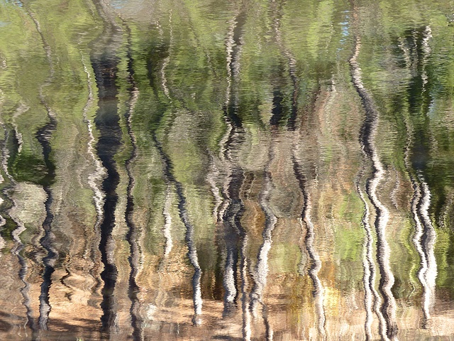 Tree reflections with water ripples