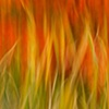 Fire Grass