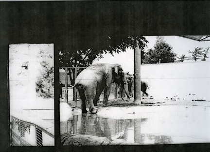 elephants, from the series _inseam_