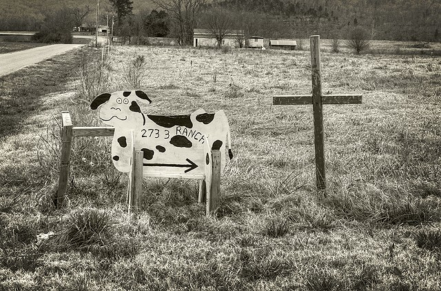 Cow Mannequin And Cross