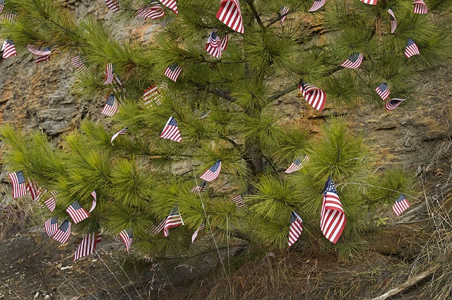 Small Flags On A Tree