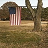 Tattered Flag Wedged In Tree
