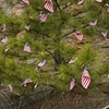 Small Flags Decorating Tree
