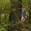 Torn Flag On A Tree