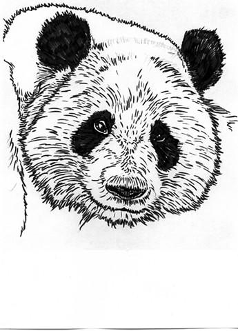 Giant Panda, preparatory drawing