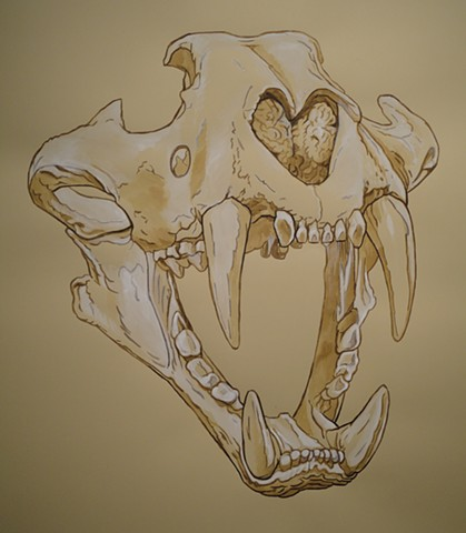 Sumatran Tiger Skull (from the Apologies to the Future series)