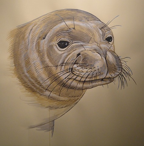 Monk Seal (from the Apologies to the Future series)