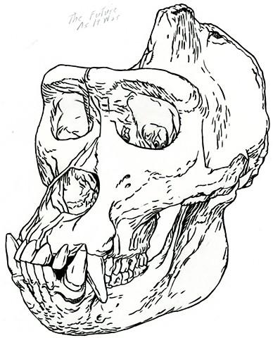 Cross River Gorilla skull, preparatory drawing