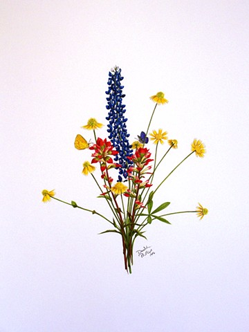 David Phillips Art Wildflower Drawings, Bluebonnet, Indian Paintbrush, DavidPhillipsArt.com