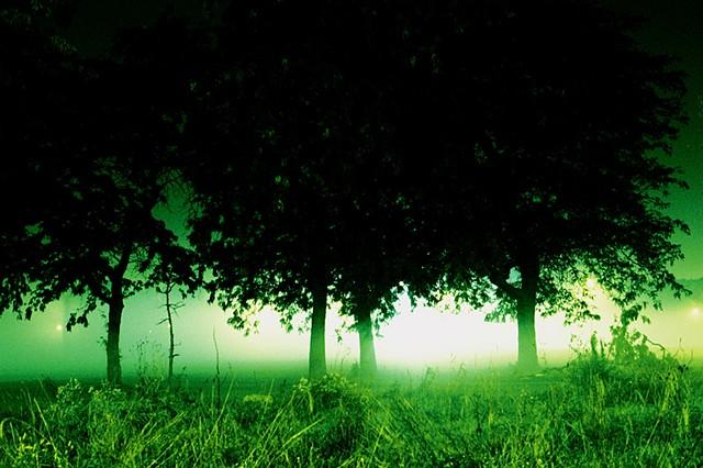Humbolt Park, Fog, Trees