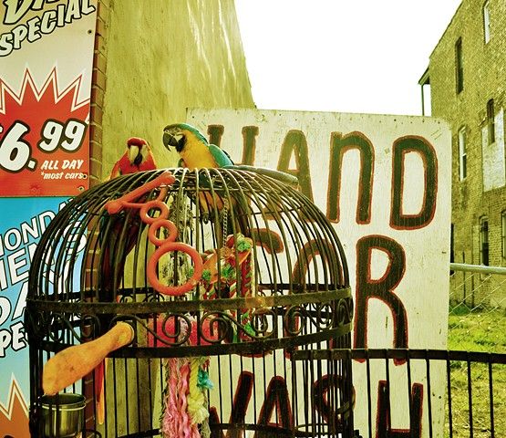 Parrots, Chicago, Western Ave, Carwash