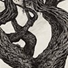 Tree N0.13
