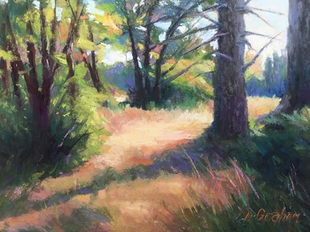 light streaming through woods