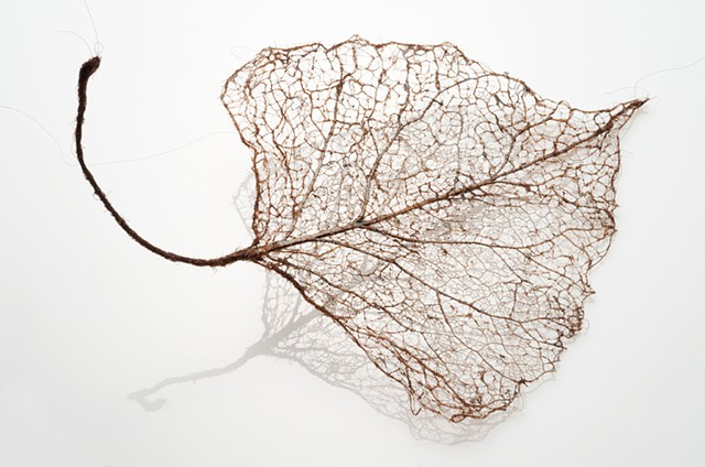 Mended Leaf Photo by Robert Diamante