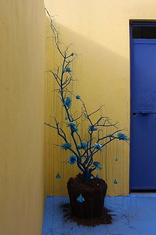 árbol azul