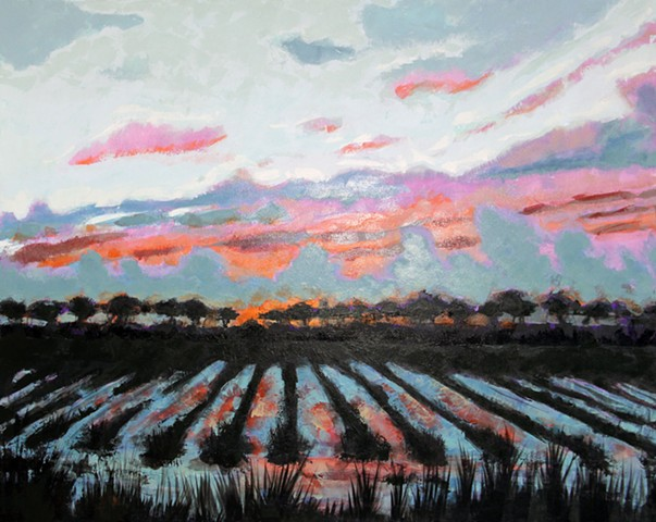 Sunset on sugarcane field