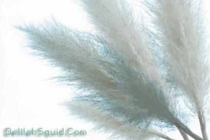 Featherlike