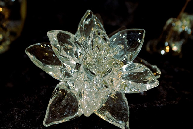 Memorabilia; The Specimen of My Life - Lotus Flower
