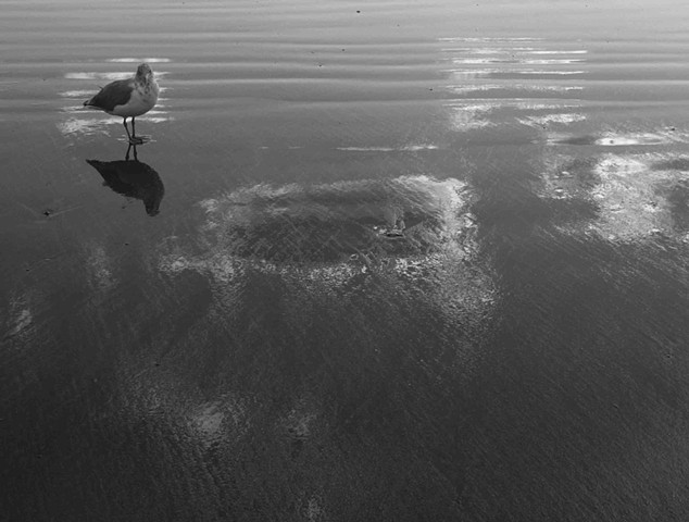 Gull and Cloud Reflections on Beach