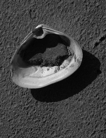 Shell on Long Sands