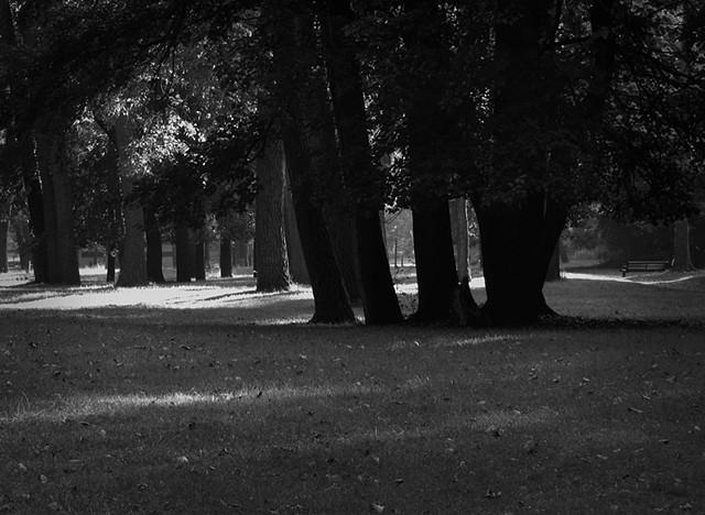 Fairport Park Trees