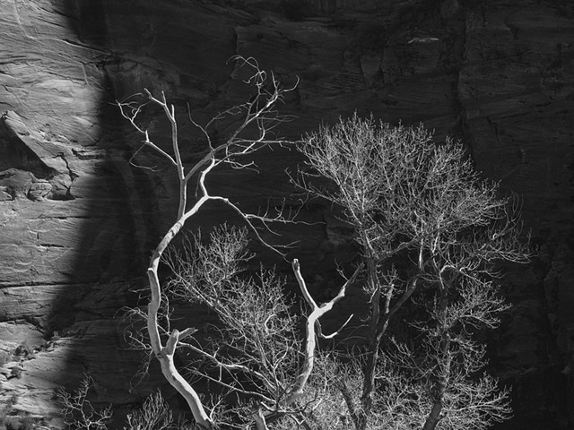 Trees at Zion