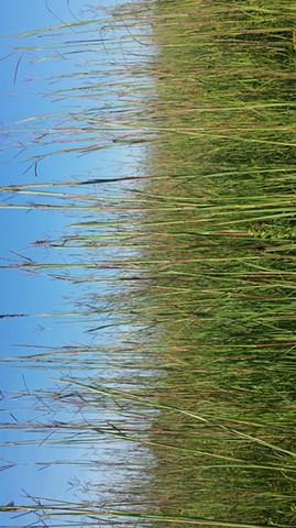 Cuba Marsh Prairie