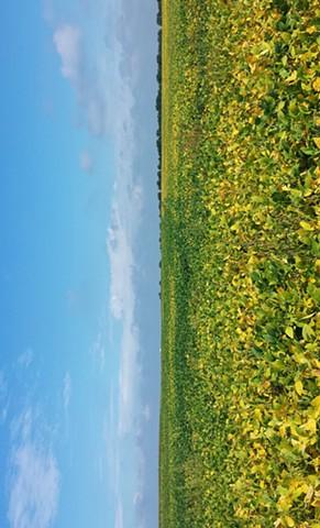 Will County Field