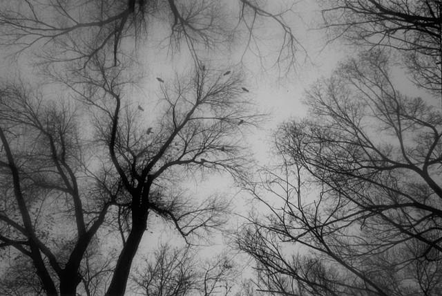 Crow Circle, frame 3 of 4