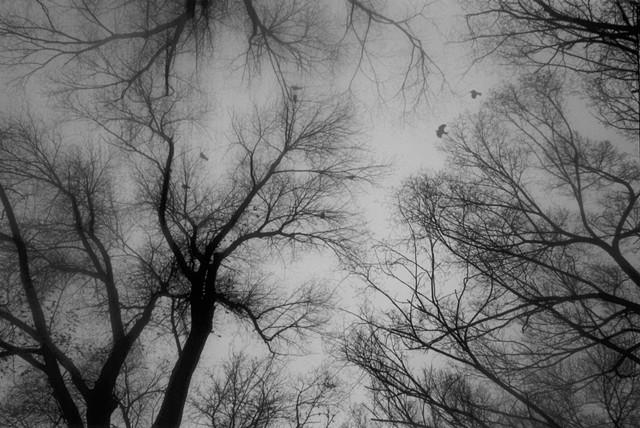 Crow Circle, frame 1 of 4