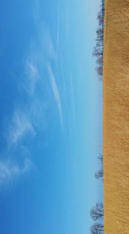 Northeastern Illinois Winter Prairie 1