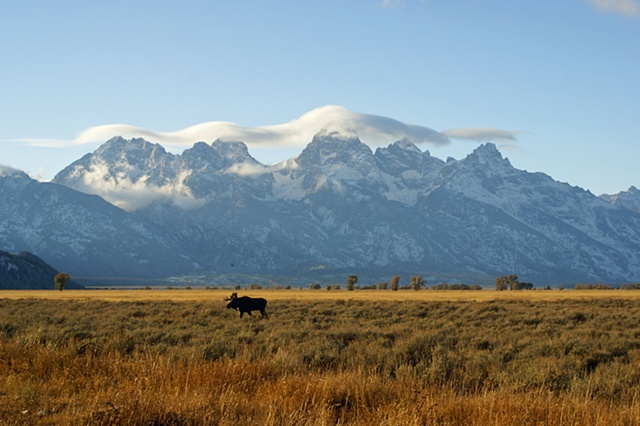 Moose and Tetons