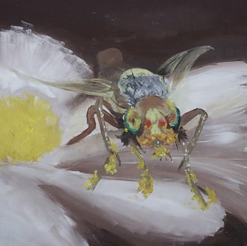 Pollen-coated Fruit Fly